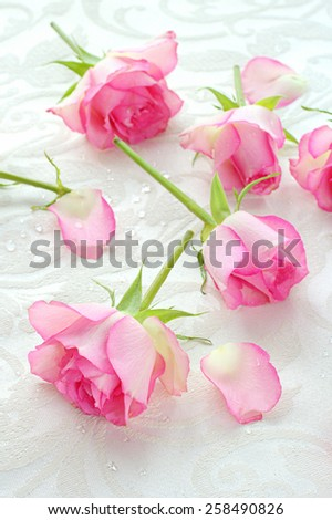 Pink roses pretty background - stock photo