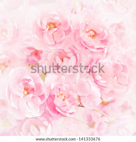 Pink roses with blur filter - stock photo
