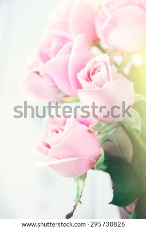 pink roses with soft light and color effect - stock photo