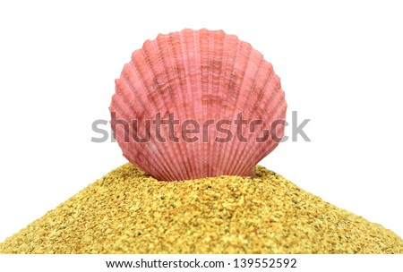 Pink shell on a pile of sand, isolated on white background - stock photo