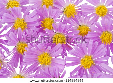 beautiful pink flower close up royalty free stock