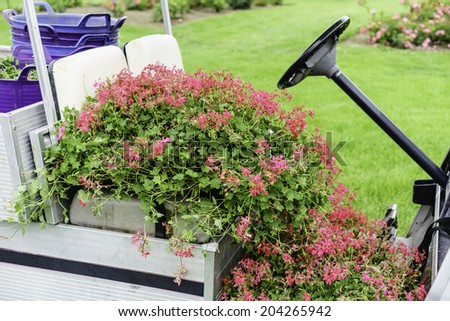 Pink snapdragons all over seat and floor of motorized garden cart in summer, northern Illinois - stock photo