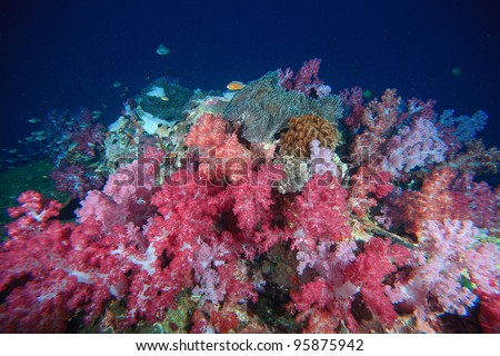 pink soft coral underwater - stock photo