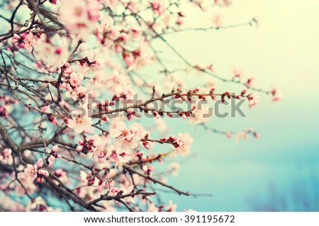 Pink spring flowers - stock photo