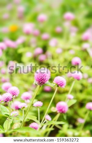 pink spring flowers in garden - stock photo