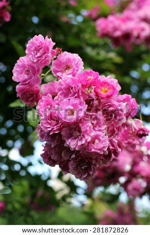 Pink tender flowers on a tree - stock photo