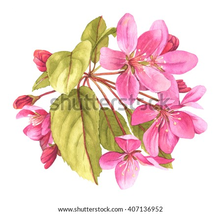 Pink tree in blossom watercolor illustration - stock photo