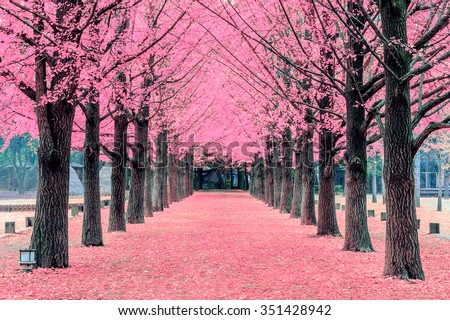 Pink tree,Nami Island in Korea - stock photo