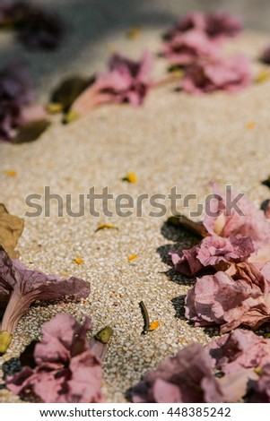 Pink Trumpet flowers on the ground