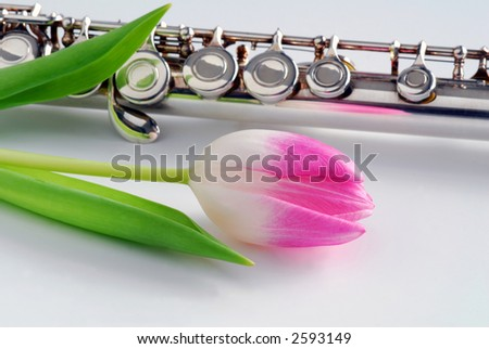 pink tulip and flute - stock photo