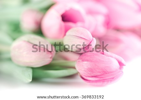 Pink tulip bouquet on white background - stock photo