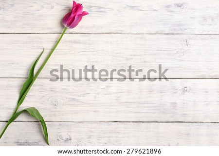 Pink tulip flower on old white wooden table background. Top view with copy space. - stock photo