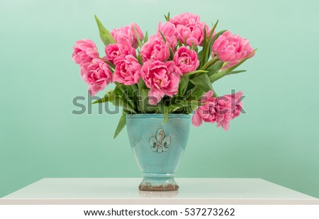 Pink tulip flowers with water drops. Floral arrangement on turquoise background