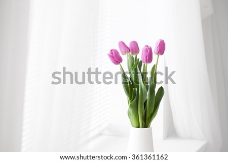 pink tulip in white room