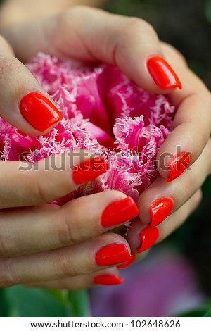 Pink tulip in women's hands with a manicure - stock photo