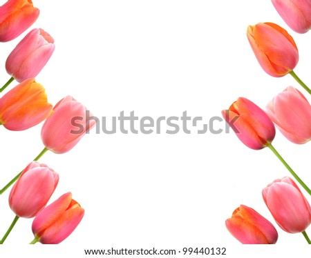 Pink tulips background and border floral design - stock photo