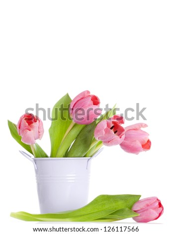 Pink tulips isolated on white background - stock photo