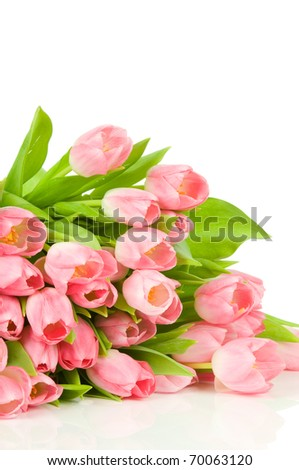Pink tulips isolated on white background