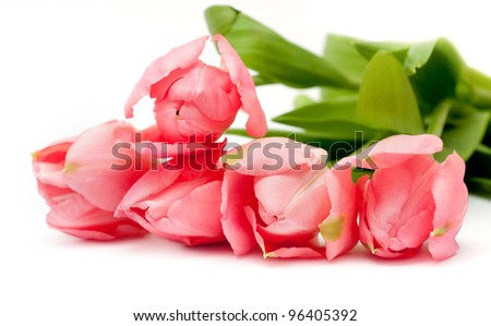 Pink tulips. Look through my portfolio to find more images of the same series - stock photo