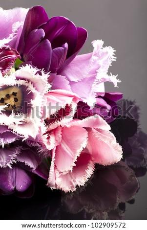 Pink tulips on black background - stock photo
