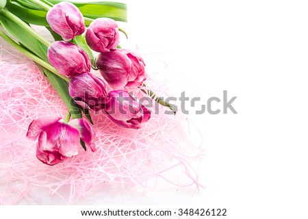 pink tulips on white background - stock photo