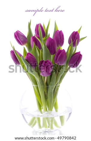 Pink tulips on white background. With sample text.