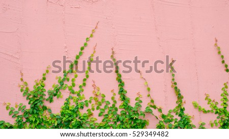 pink wall with ivy plant