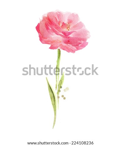 Pink watercolor flower - stock photo