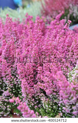 Pink wildflowers - stock photo