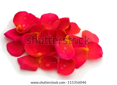 Pink yellow rose petals, over white - stock photo
