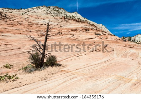 Pinky rocky waves in Zion National Park, USA - stock photo