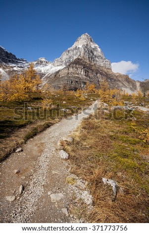 Pinnacle Mountain, with Beautiful Larch Trees Sentinel Pass Hike, Lake Louise Banff National Park, Alberta, Canada Picture taken on September 26, 2015 - stock photo