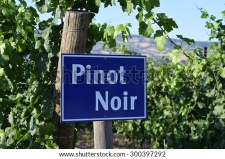 Pinot Noir grape sign - stock photo