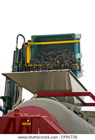 Pinot noir grapes being dumped into a hopper - stock photo
