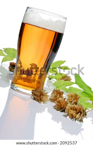 pint of beer, bitter, lager with hops for brewing - stock photo