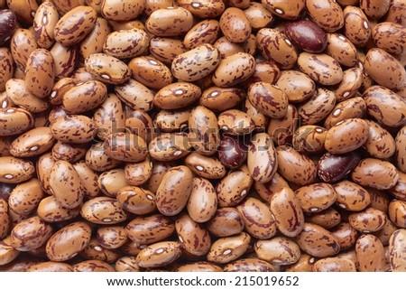 pinto bean - stock photo