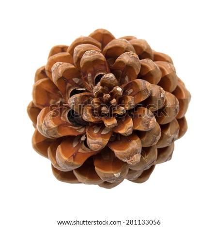 Pinus pinea, stone pine cone isolated on white  - stock photo