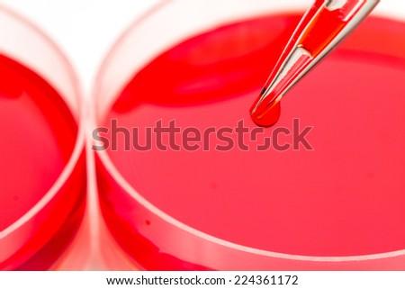 pipette add red color liquid solution in petri dishes - stock photo