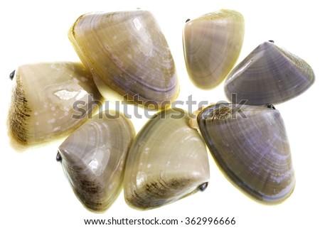 Pipis (Plebidonax deltoides) is a small, edible saltwater clam or marine bivalve mollusc of the family Donacidae, endemic to Australia - stock photo