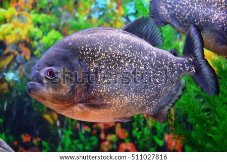 Stock photos royalty free images vectors shutterstock for Predator fish tank