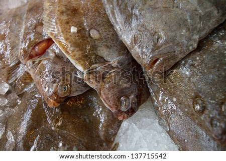 Plaice for sale at fresh fish market. Selective focus. - stock photo