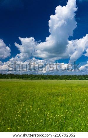 Plain Nature Grass Lawn  - stock photo
