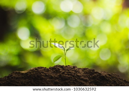 Plant a tree Natural tree Green backgroun
