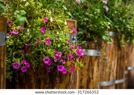 Plant and flowers in the wooden tub
