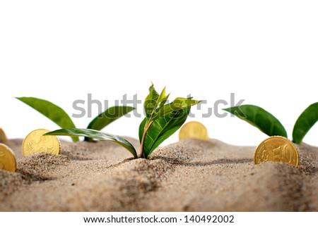 Plant and money in sand. - stock photo