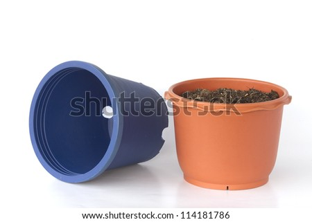 plant and pot. - stock photo