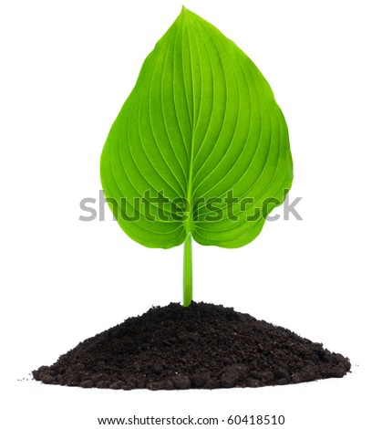 Plant and soil, isolated on white background - stock photo