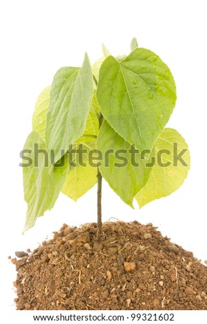 Plant and soil isolated on white background - stock photo