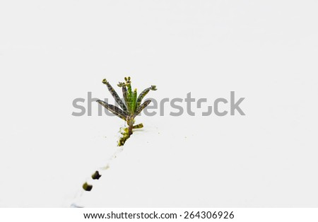 Plant born in wall crack - white background - stock photo