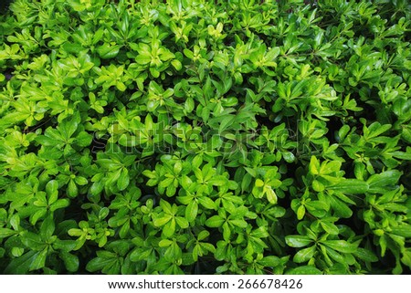 plant bright green summer blooms texture - stock photo